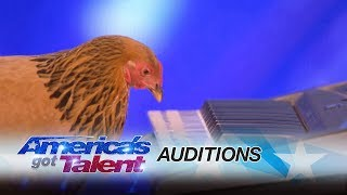 Jokgu Of The Flockstars Chicken Plays Patriotic Tune On Keyboard   Americas Got Talent 2017