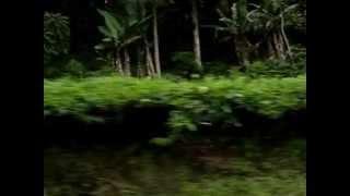 Tea Plantation in Java