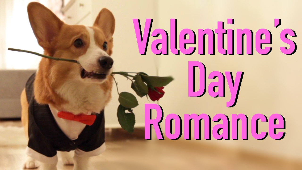 Fesselnd VALENTINEu0027S DAY WITH Topi The Corgi   YouTube