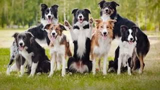 Немодные собаки. Кто они?