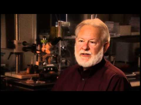 David Nichols: My involvement in Rick Strassman's DMT study