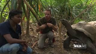 WILDLive! - Tortues géantes d'Aldabra - S01 E01