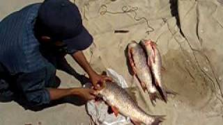 Fishing Trip Of Jhelum River 4th Sep 2009