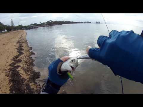 Fishing for Bream on the Flats, South East Queensland. Land based, light line and surface lures
