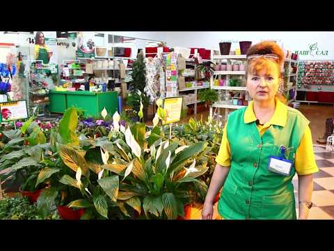 ТОП-10 самых легких в уходе комнатных растений от компании ВАШ САД