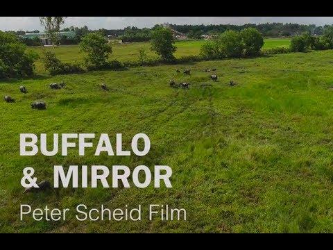 Water Buffalo & Mirror - Trailer 3. - Documentary Water Landscapes