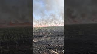 Nusaybin-Suriye sınırında çıkan yangına korkuttu