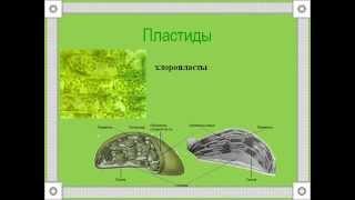 Строение растительной клетки 1.AVI