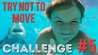Try Not To Move Challenge Compilation Don't Flinch 5