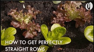 How to plant straight rows of vegetables and save seeds using seed tape