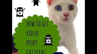 How To Get Rid of Fleas on Your Cat | Simple and Effective!
