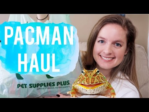 Pacman Frog Supply Haul   Pet Supply Haul   My Pacman Lemon