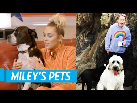 All Of Miley Cyrus' Pets!
