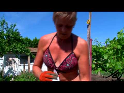 Organic Gardening in the Sunny Okanagan, British Columbia -   May 15 to now crops aplenty  - YouTube