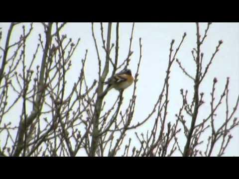Flock Of 200+ Birds - Bodney