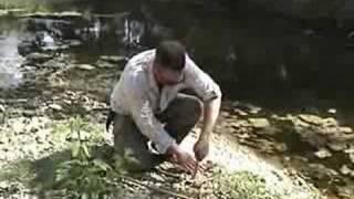 maggot farmer