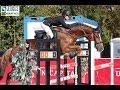 FOR SALE - Donadoni - *2008, gelding by Vittorio, www.salesporthorses.com