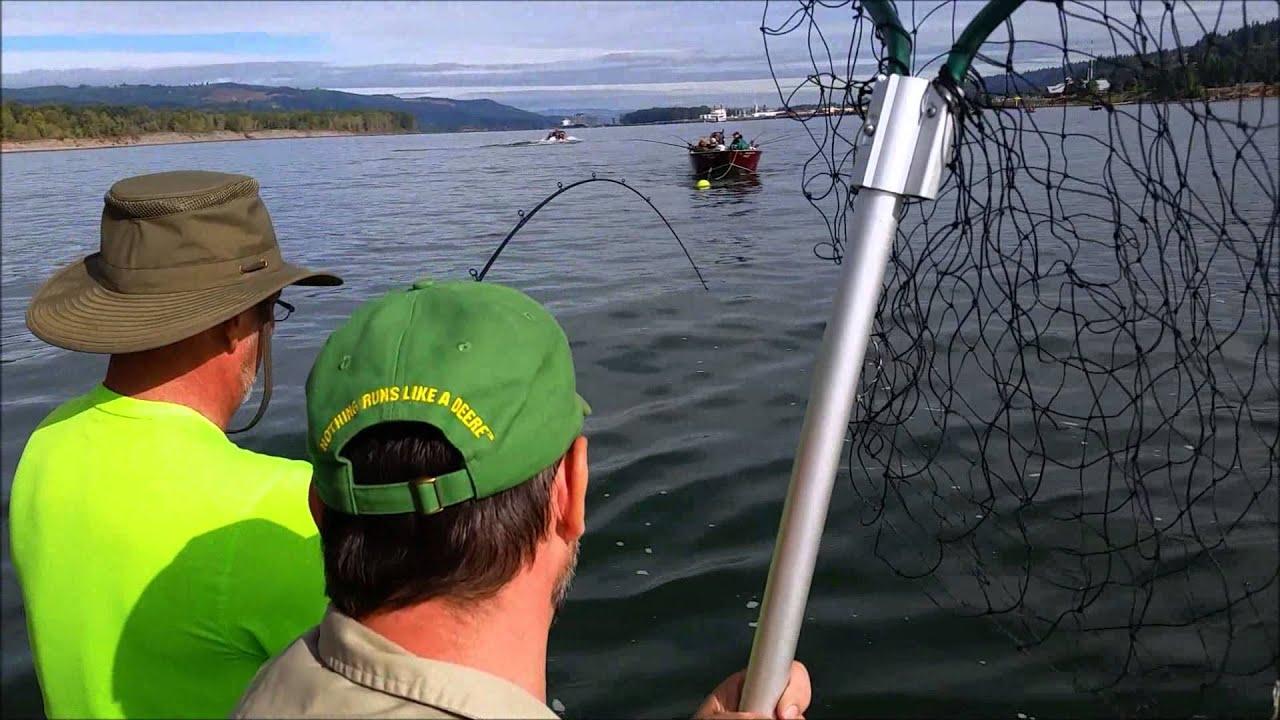 2015 salmon fishing kalama youtube for Columbia river fish counts