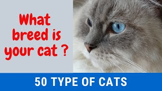 Cats and Cat Breeds; List of 50 Breeds with Details