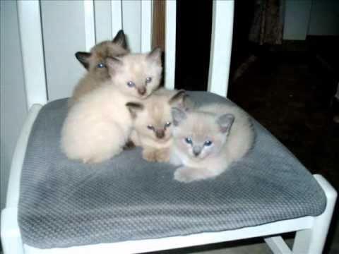 die sch nsten katzen cats chats felinae youtube. Black Bedroom Furniture Sets. Home Design Ideas