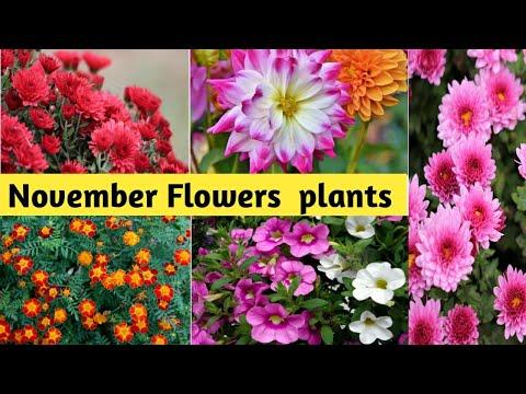 सर्दियों के फूलों के पौधे लगाने की पूरी जानकारी