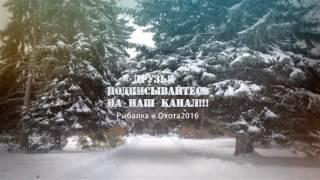 Жорстокий бій Лайки vs Кабан відео +18 Рибалка і Полювання 2016