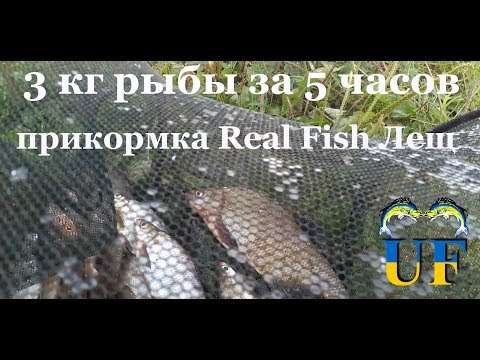 lionna рыбы знакомства киев