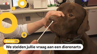 Kan het corona virus ook huisdieren ziek maken?