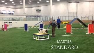 Lancelot Agility 3-20-2015 Master's Standard
