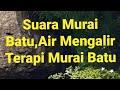 Suara Murai Batu Air Mengalir Terapi Murai Batu  Mp3 - Mp4 Download