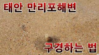 [직하법] 태안 만리포해변 구경하는 법
