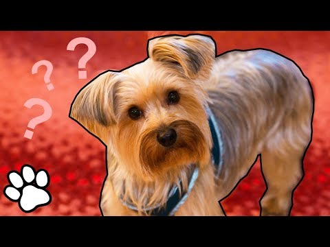 What the Fluff! Blanket Prank on Pets 👀 | That Pet Life
