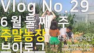 Vlog #29 6월 둘째 주 주말농장 브이로그 / 와…