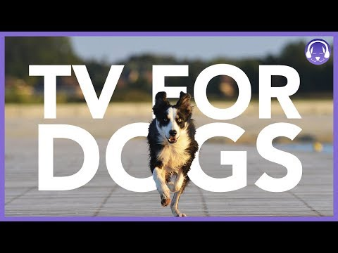 TV For Dogs: Interactive Dog TV | 7 Hours of Entertainment