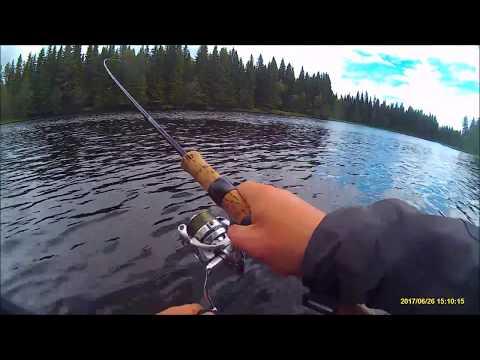 Grayling Browntrout Fishing Langan Sweden 2017 06