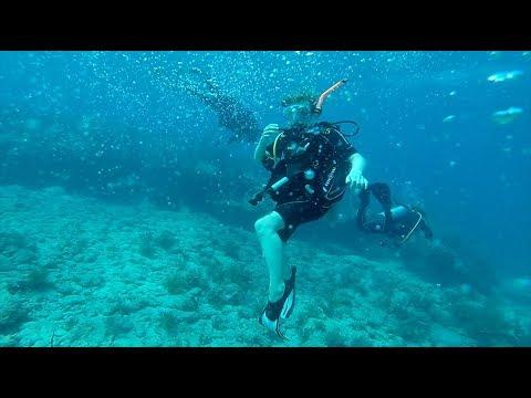 Studying Marine Biology - Ave Maria University