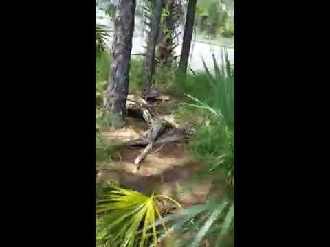 Part 3 Illegal Dumping Davenport, Polk County, Fl