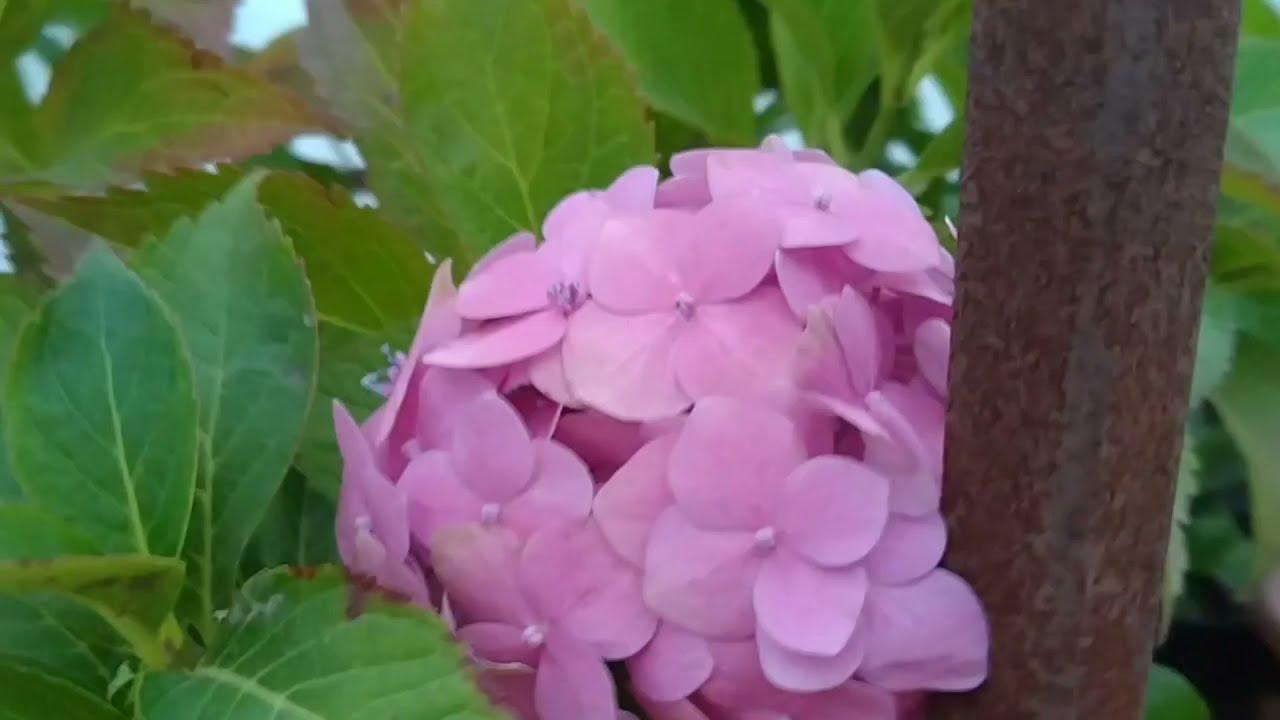 теплицы с цветами смоленск
