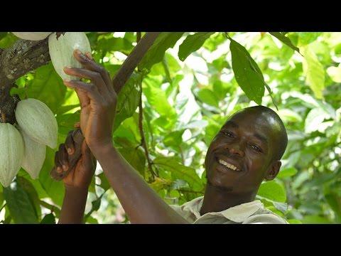 Gemeinsam mehr erreichen – Fairtrade-Kakao aus der Elfenbeinküste