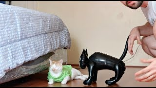 "Pranking My CATS with a ""FAKE CAT"" Hilarious Reactions! 😂"