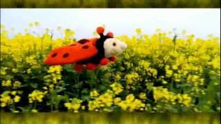 Kijk Lieverheersbeestje (Pino) filmpje