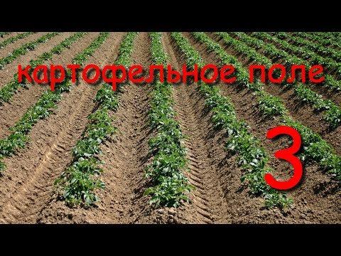 картофельное поле 3 финиш