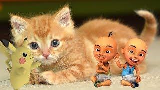 Lagu Anak Kucing Lucu Simeong Upin Ipin Tayo Pokemon Pikachu