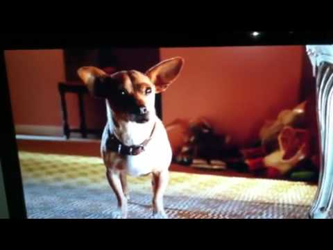 beverly chihuahua beverly hills chihuahua 3 youtube 1109