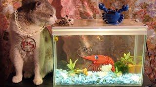 Самодельный мини аквариум (из вентилятора от компьютера)