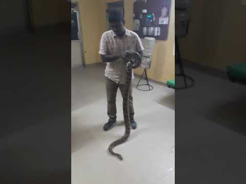 Chennai Forest Department Snake Video
