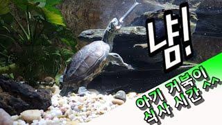아기 거북아~~~ 맘마 먹자!! ^^ 대구 신세계백화점…