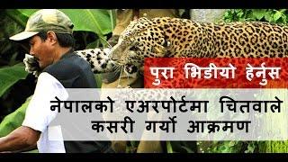 हेर्नुस त्रिभुवन विमानस्थलमा चितुवाको चर्तिकला || Leopard shuts down Nepal International Airport