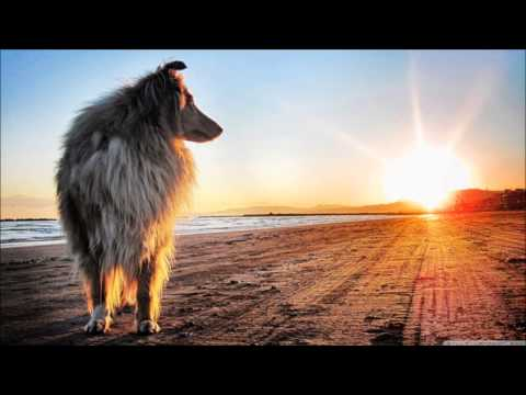 Lassie Theme 1300% Slower