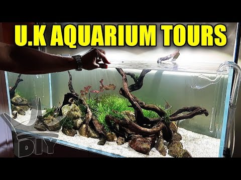 Aquarium Tours In The UK